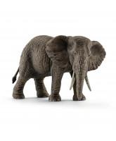 Afrikanischer Elefant Weibchen