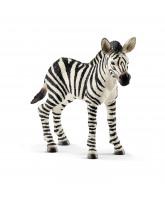 Zebrafohlen