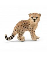 Gepard Junges