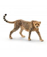 Gepard Weibchen