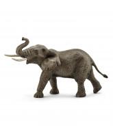 Afrikanischer Elefant Männchen